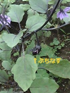 050617_100433_ed_m.jpg
